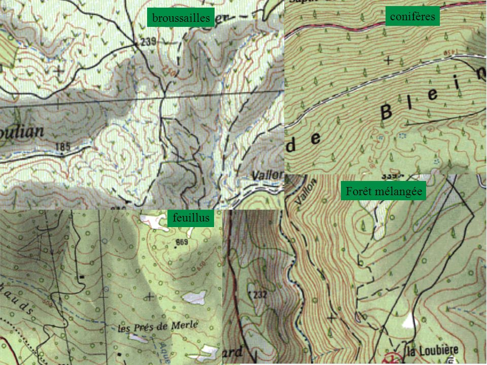 broussailles conifères Forêt mélangée feuillus