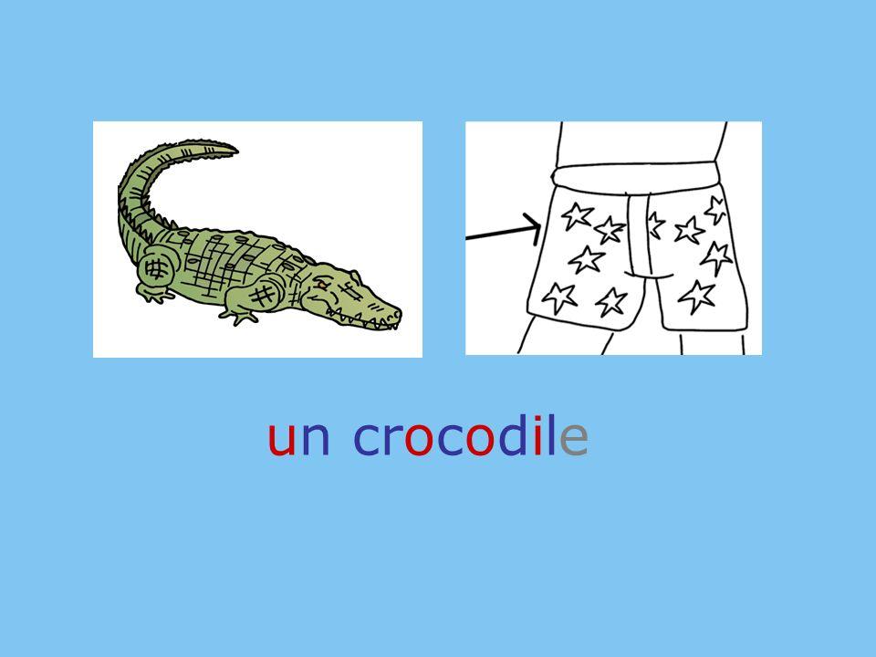 un crocodile roue