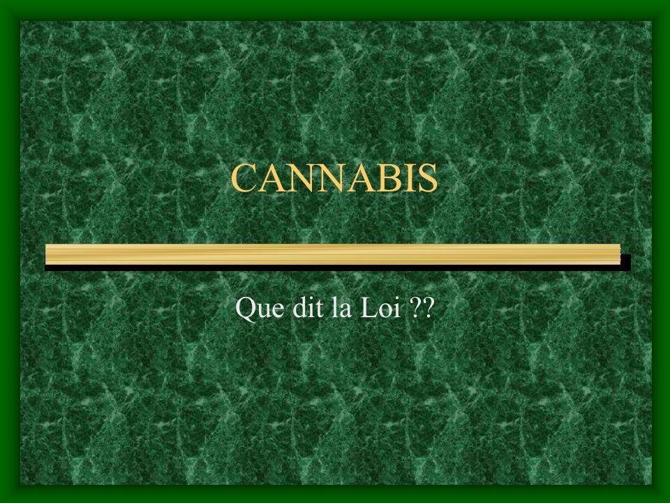 CANNABIS Que dit la Loi