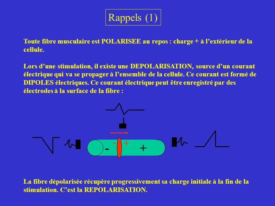 Rappels (1) Toute fibre musculaire est POLARISEE au repos : charge + à l'extérieur de la cellule.
