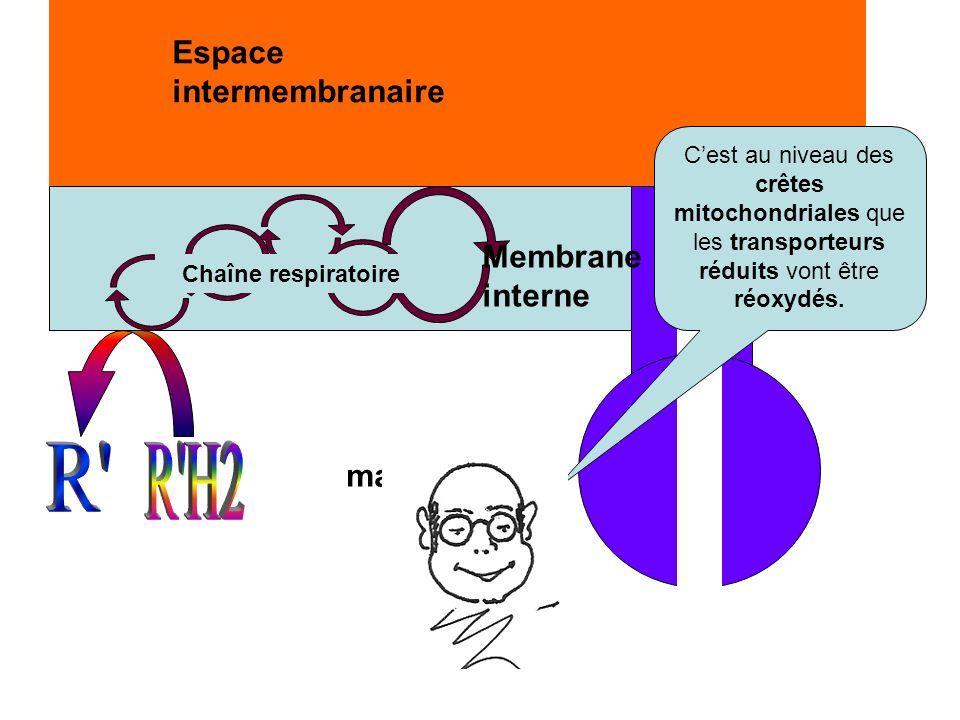 R R H2 Espace intermembranaire Membrane interne matrice
