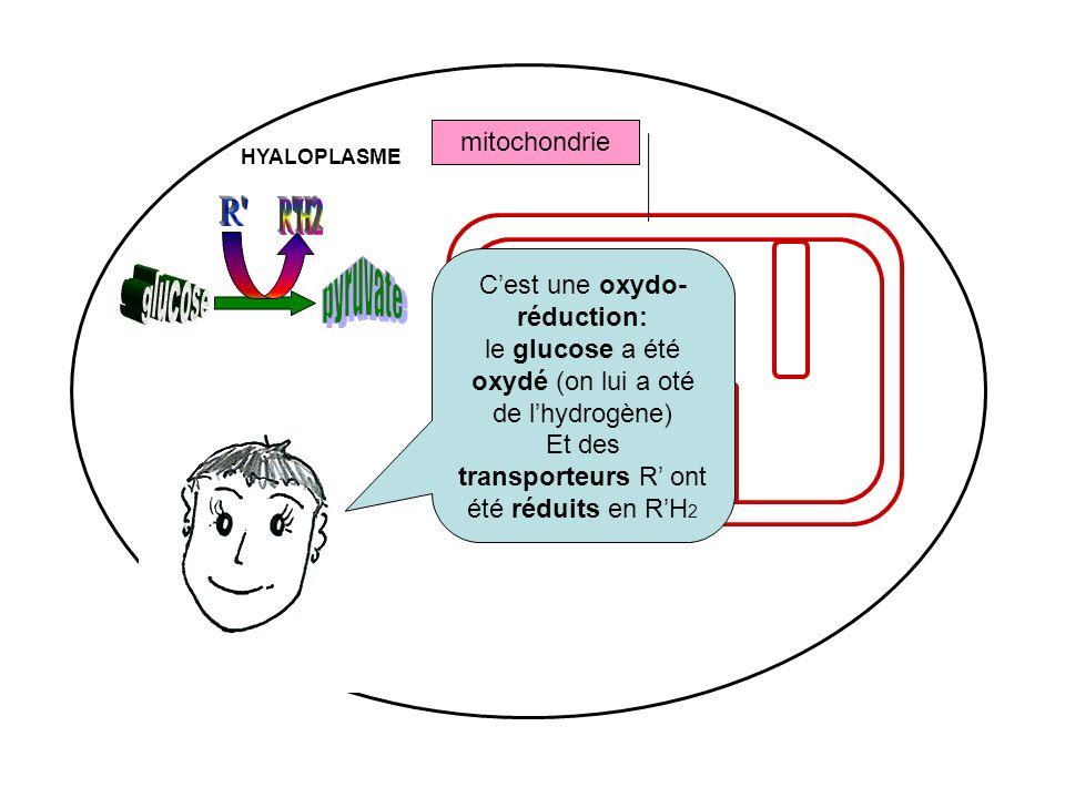 R R H2 pyruvate glucose mitochondrie C'est une oxydo-réduction: