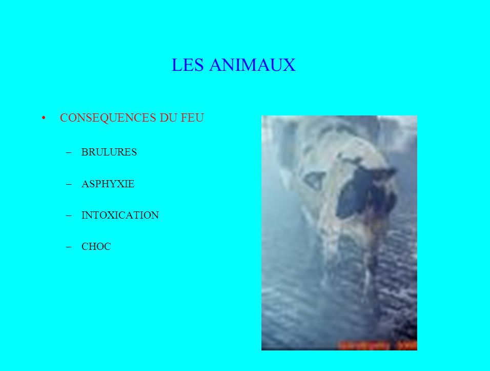 LES ANIMAUX CONSEQUENCES DU FEU BRULURES ASPHYXIE INTOXICATION CHOC