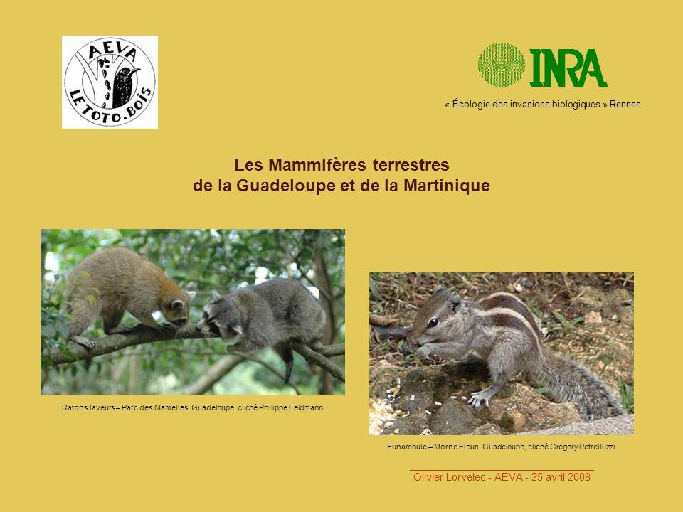Les Mammifères terrestres de la Guadeloupe et de la Martinique