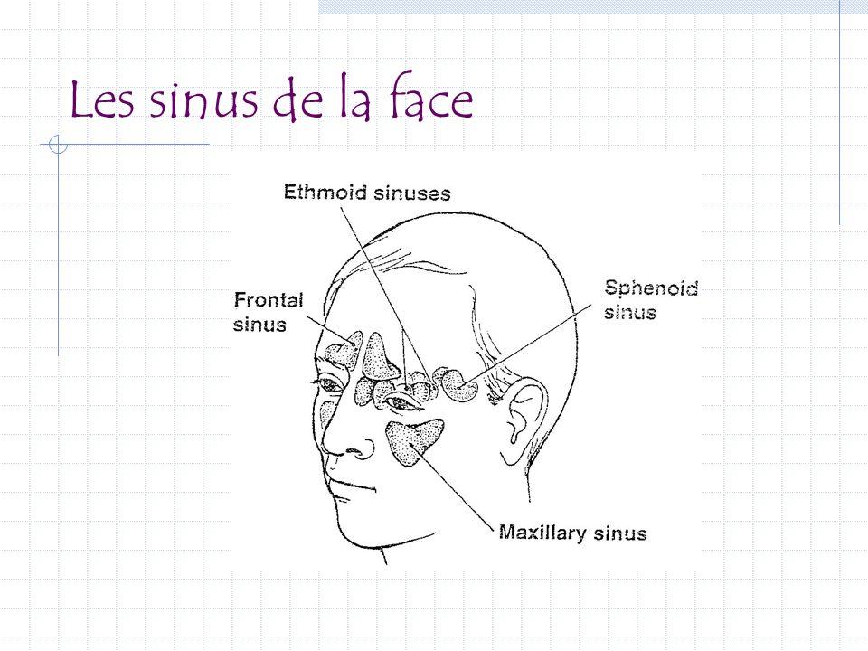 Les sinus de la face