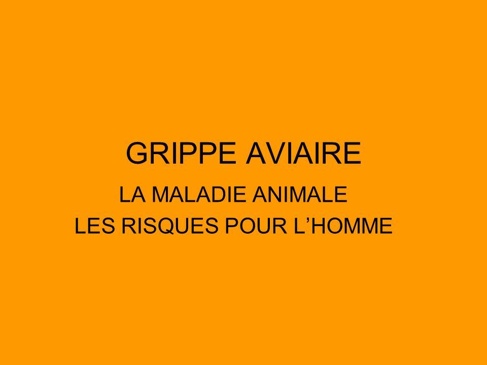 LA MALADIE ANIMALE LES RISQUES POUR L'HOMME