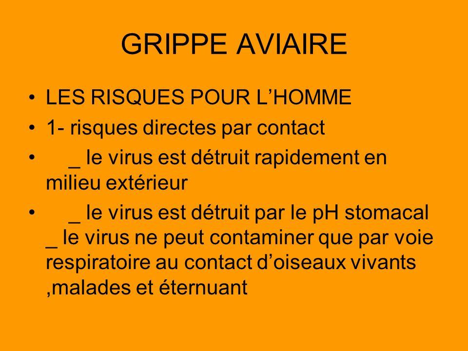 GRIPPE AVIAIRE LES RISQUES POUR L'HOMME