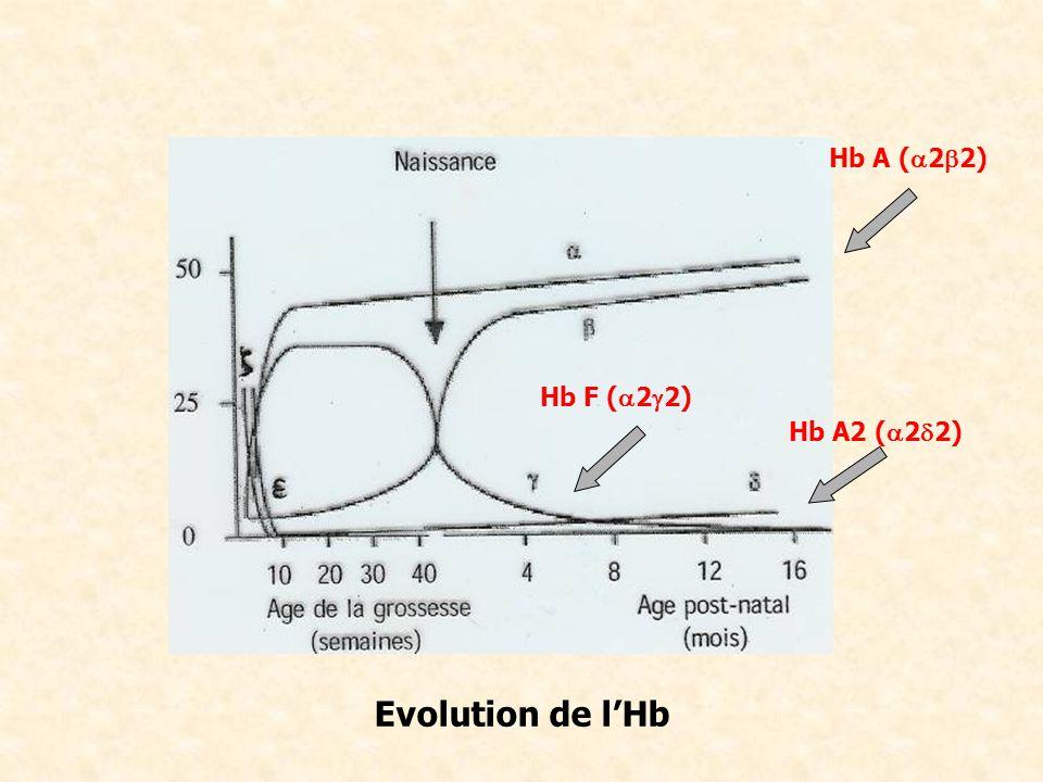 Hb A (a2b2) Hb F (a2g2) Hb A2 (a2d2) Evolution de l'Hb