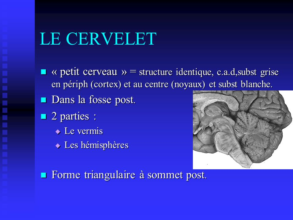 LE CERVELET « petit cerveau » = structure identique, c.a.d,subst grise en périph (cortex) et au centre (noyaux) et subst blanche.