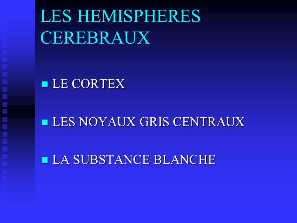 LES HEMISPHERES CEREBRAUX