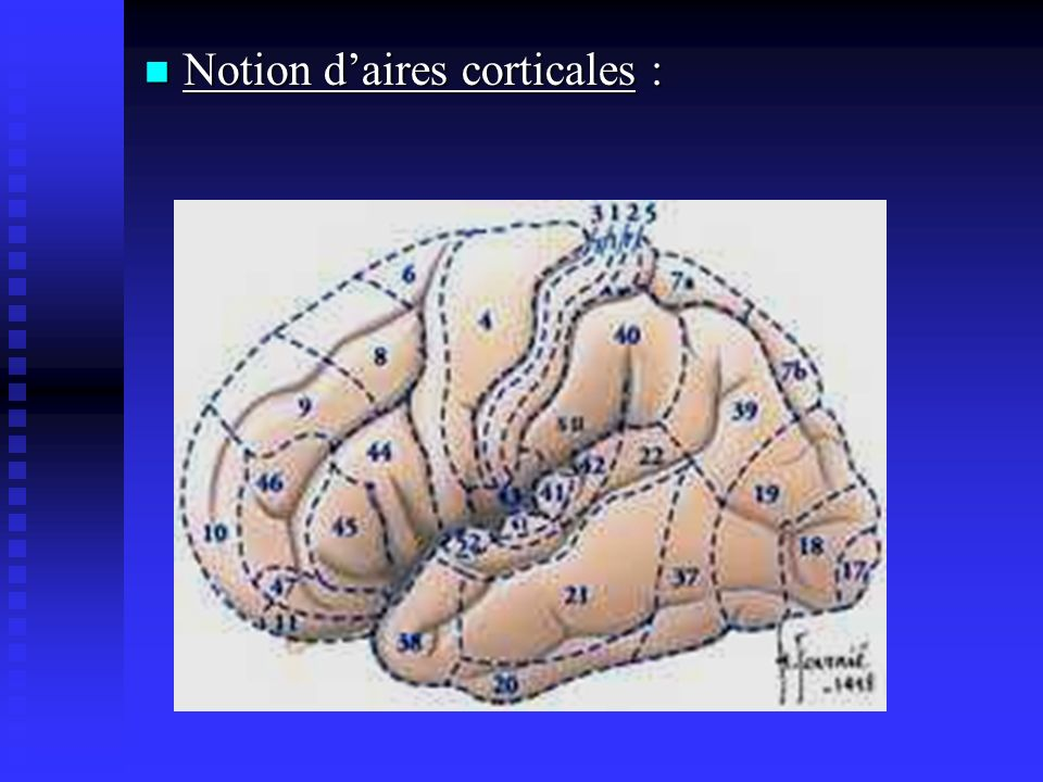 Notion d'aires corticales :