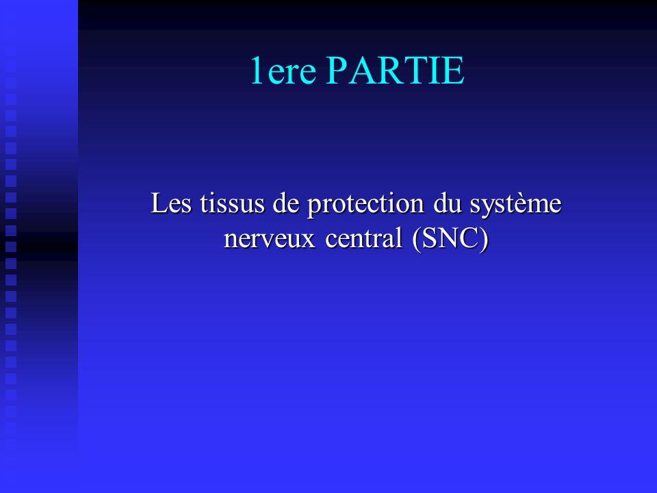 Les tissus de protection du système nerveux central (SNC)