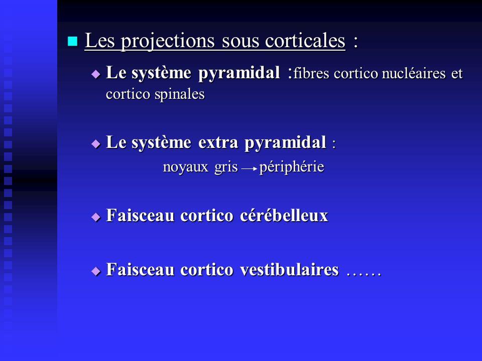 Les projections sous corticales :