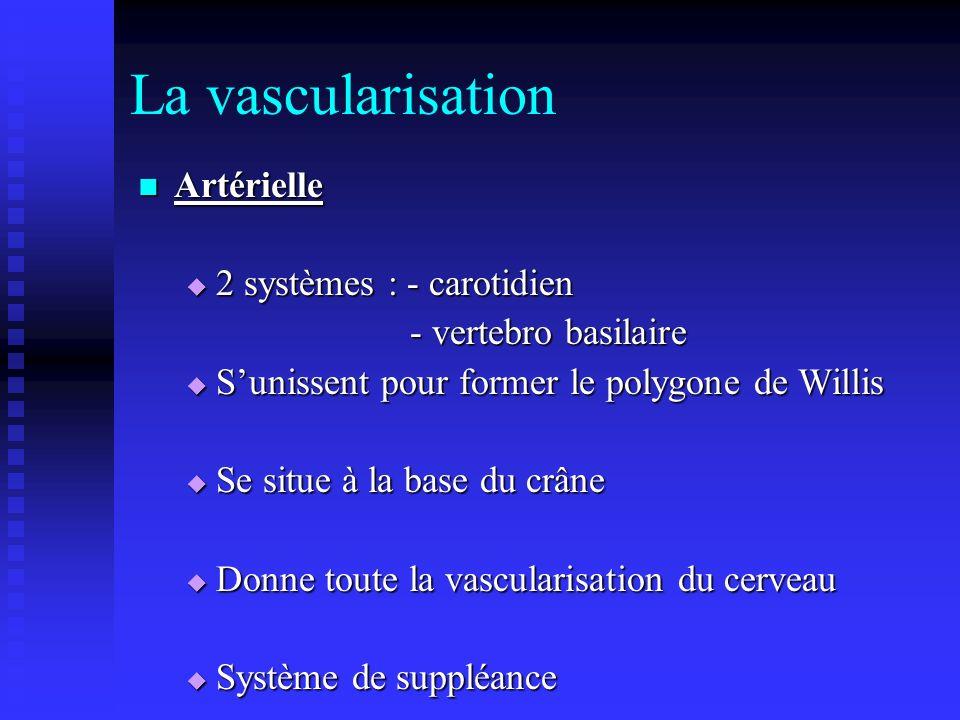 La vascularisation Artérielle 2 systèmes : - carotidien
