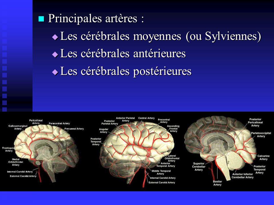 Principales artères : Les cérébrales moyennes (ou Sylviennes) Les cérébrales antérieures. Les cérébrales postérieures.