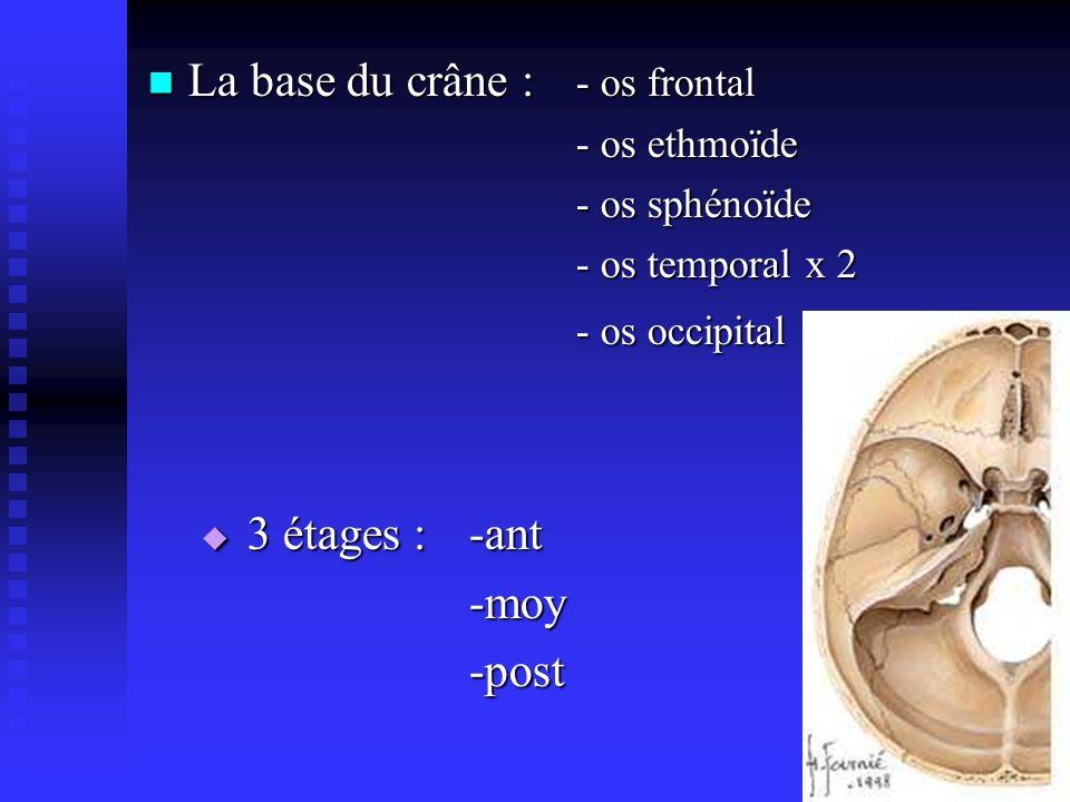 La base du crâne : - os frontal