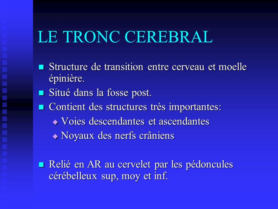 LE TRONC CEREBRAL Structure de transition entre cerveau et moelle épinière. Situé dans la fosse post.