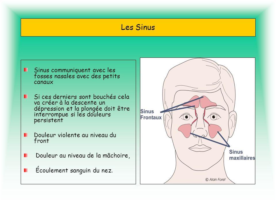 Les Sinus Sinus communiquent avec les fosses nasales avec des petits canaux.