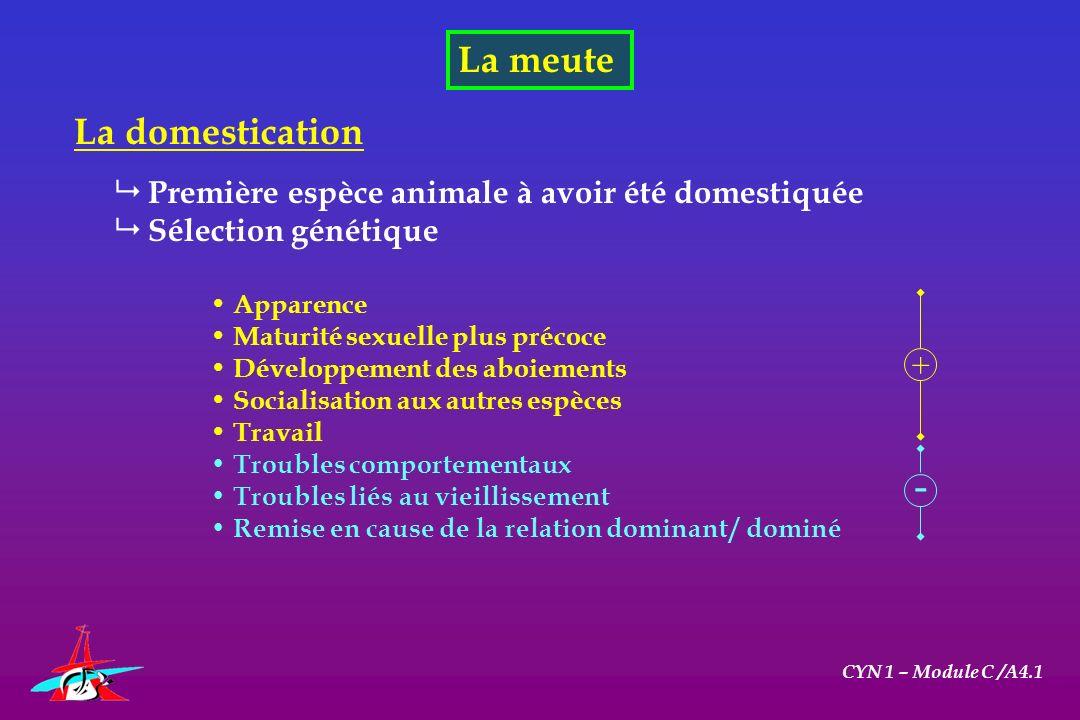 - La meute La domestication