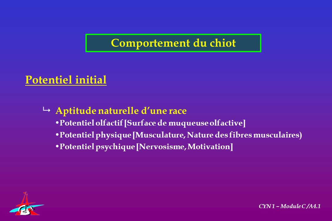 Comportement du chiot Potentiel initial Aptitude naturelle d'une race