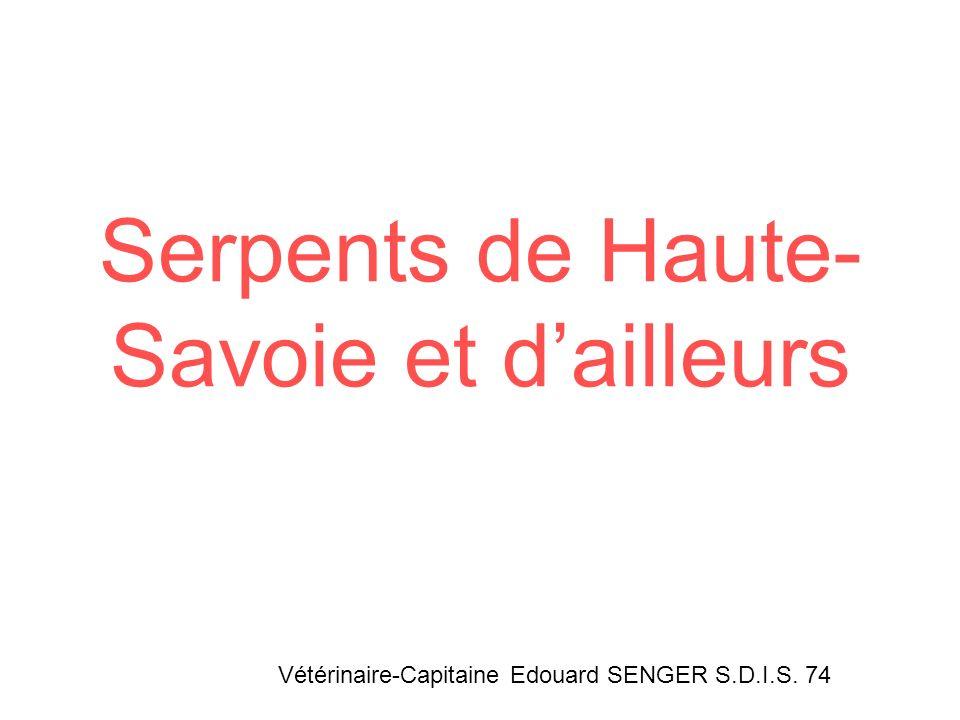 Serpents de Haute-Savoie et d'ailleurs