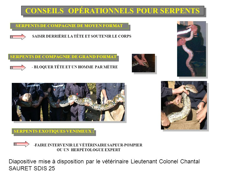 CONSEILS OPÉRATIONNELS POUR SERPENTS