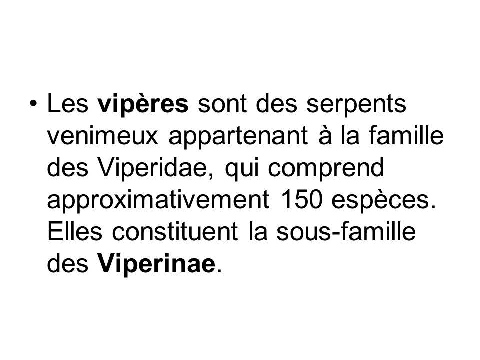 Les vipères sont des serpents venimeux appartenant à la famille des Viperidae, qui comprend approximativement 150 espèces.