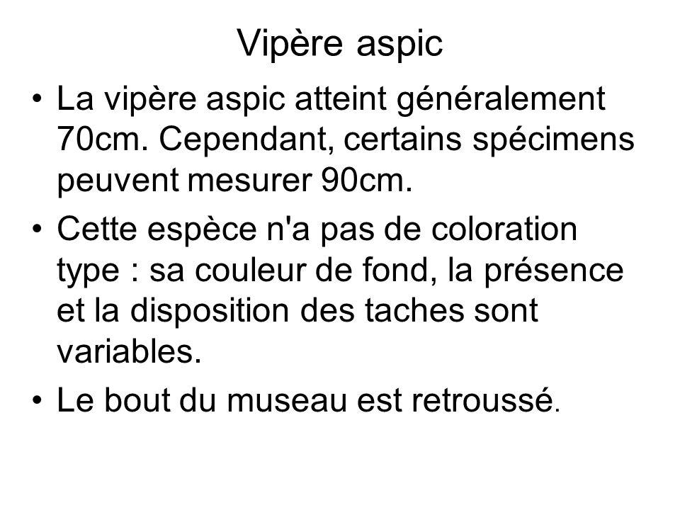 Vipère aspic La vipère aspic atteint généralement 70cm. Cependant, certains spécimens peuvent mesurer 90cm.