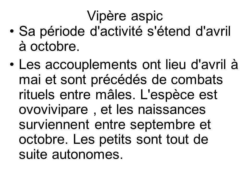 Vipère aspic Sa période d activité s étend d avril à octobre.
