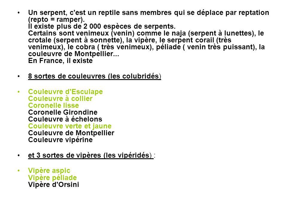 Un serpent, c est un reptile sans membres qui se déplace par reptation (repto = ramper). Il existe plus de 2 000 espèces de serpents. Certains sont venimeux (venin) comme le naja (serpent à lunettes), le crotale (serpent à sonnette), la vipère, le serpent corail (très venimeux), le cobra ( très venimeux), péliade ( venin très puissant), la couleuvre de Montpellier... En France, il existe