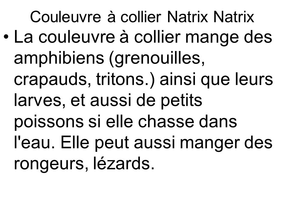 Couleuvre à collier Natrix Natrix
