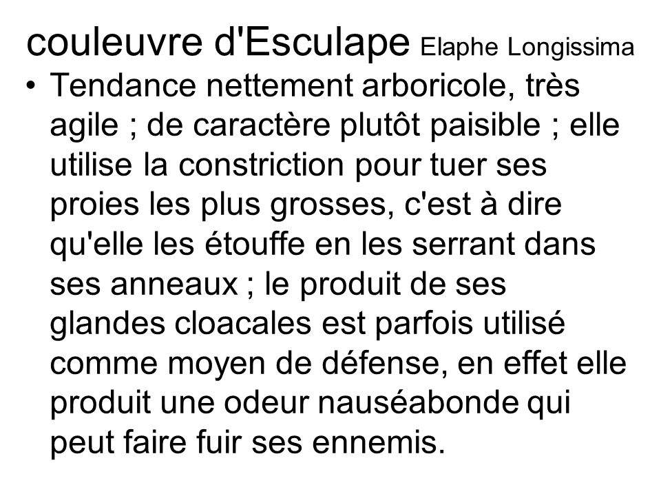 couleuvre d Esculape Elaphe Longissima