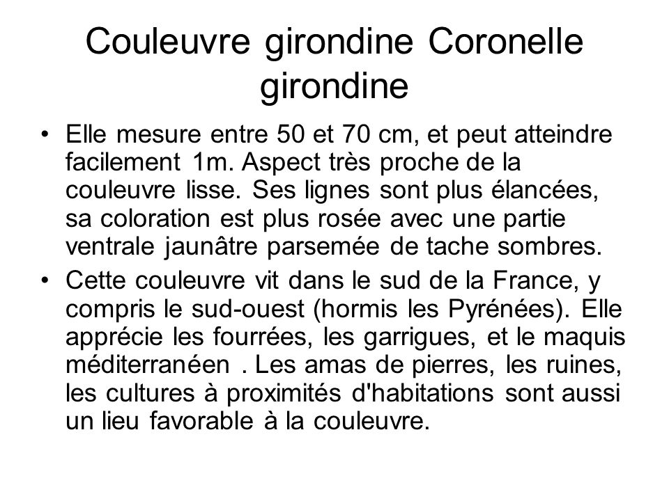 Couleuvre girondine Coronelle girondine
