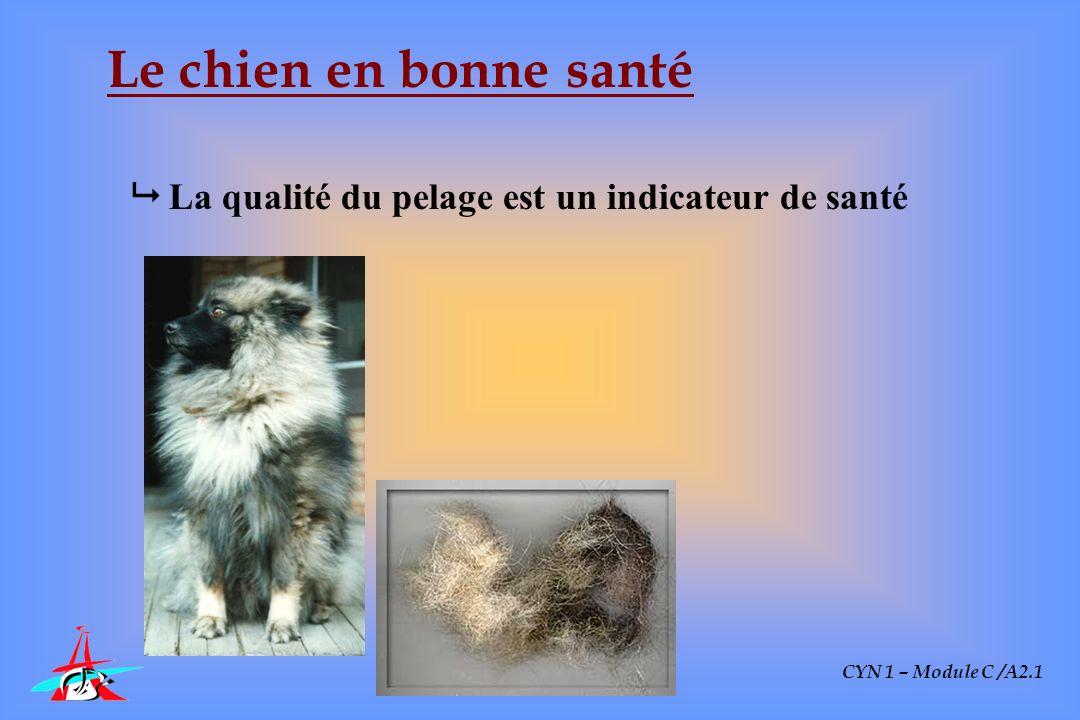 Le chien en bonne santé  La qualité du pelage est un indicateur de santé CYN 1 – Module C /A2.1
