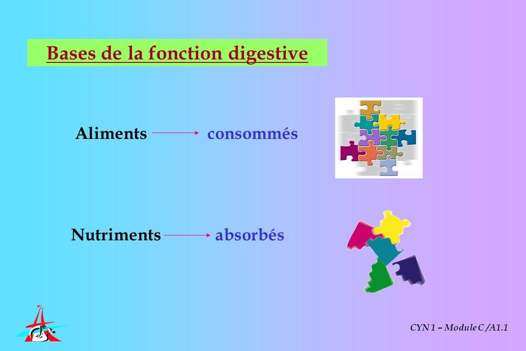 Bases de la fonction digestive