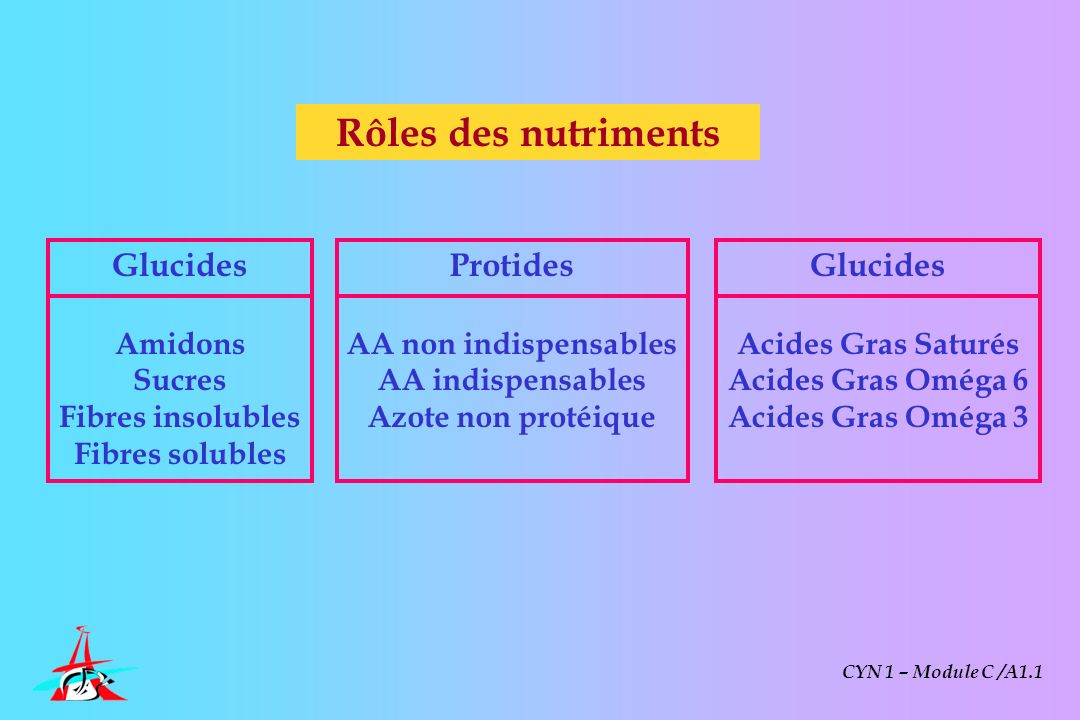 Rôles des nutriments Glucides Protides Glucides Amidons Sucres