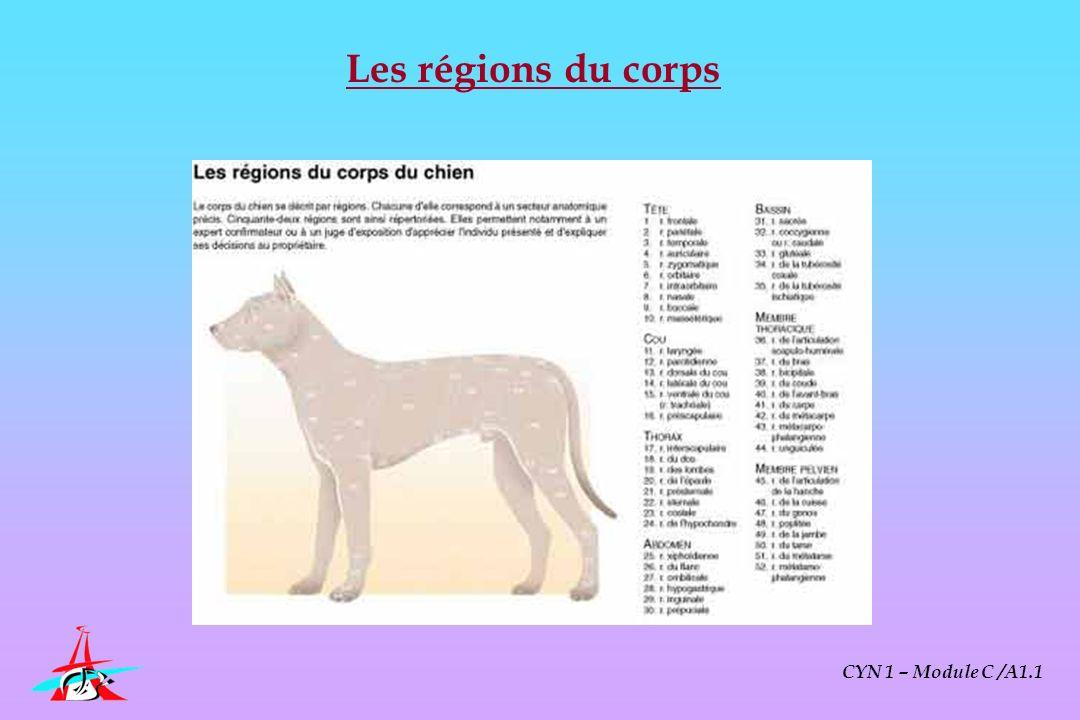 Les régions du corps CYN 1 – Module C /A1.1