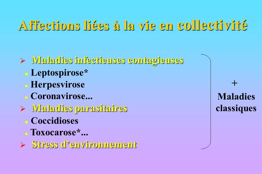 Affections liées à la vie en collectivité
