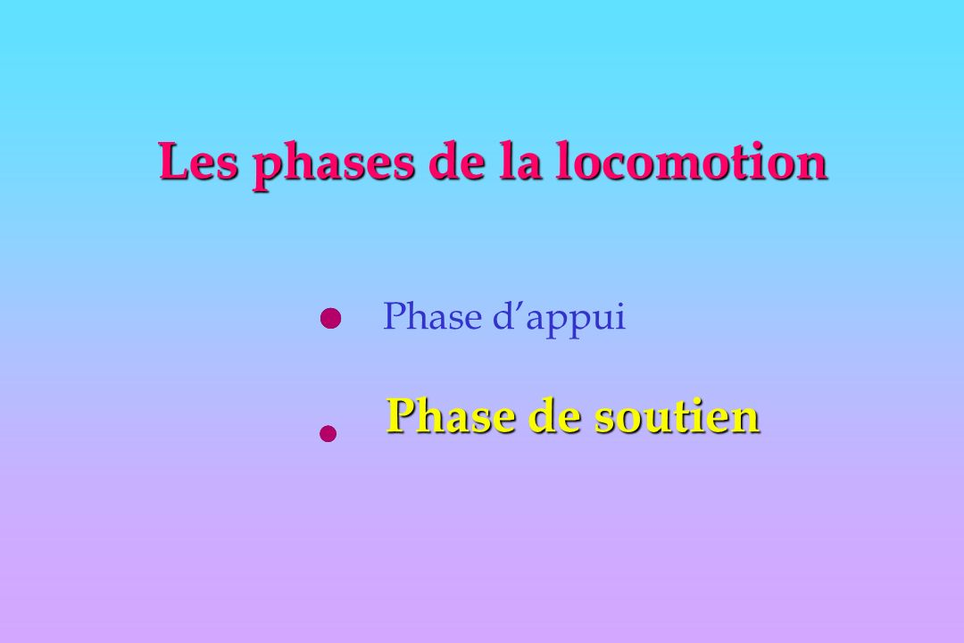 Les phases de la locomotion