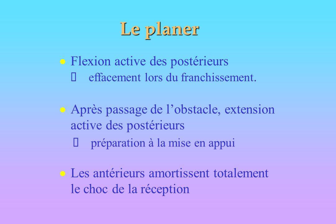 Le planer Flexion active des postérieurs