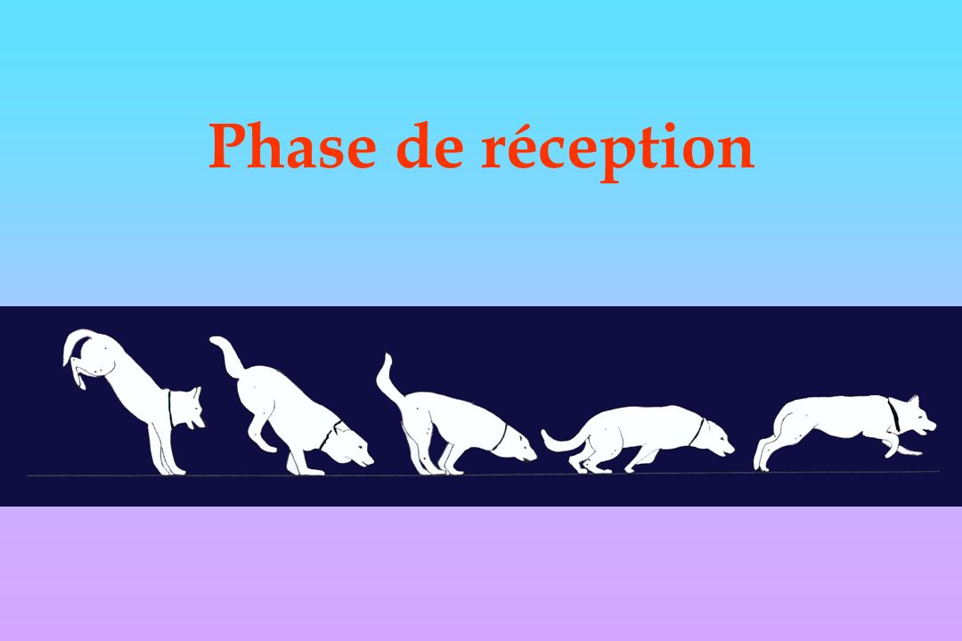 Phase de réception