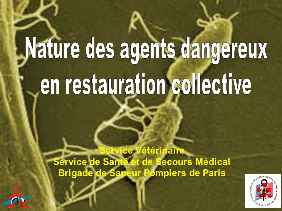 Nature des agents dangereux en restauration collective