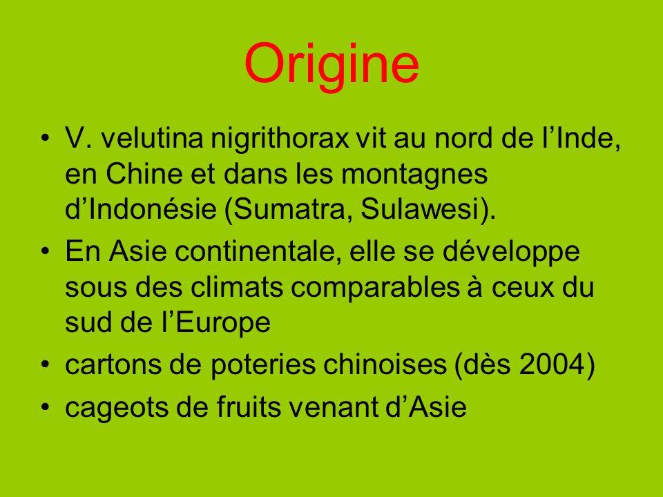 OrigineV. velutina nigrithorax vit au nord de l'Inde, en Chine et dans les montagnes d'Indonésie (Sumatra, Sulawesi).