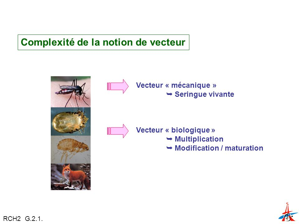 Complexité de la notion de vecteur