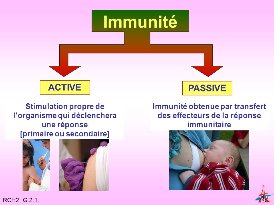 Immunité obtenue par transfert des effecteurs de la réponse