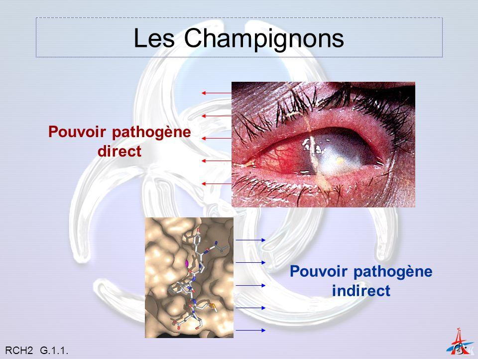 Les Champignons Pouvoir pathogène direct Pouvoir pathogène indirect