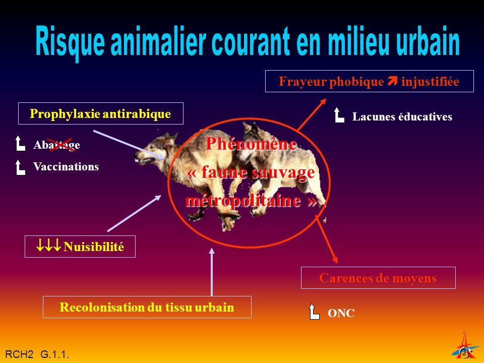 Phénomène « faune sauvage métropolitaine »