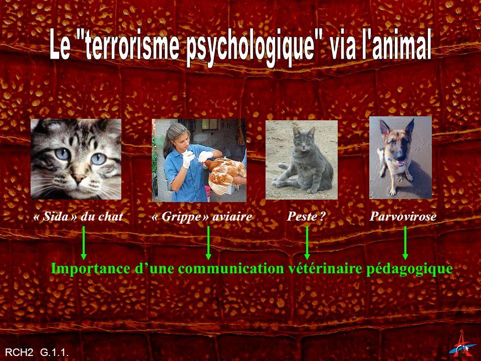 Importance d'une communication vétérinaire pédagogique
