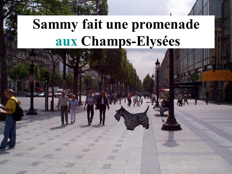 Sammy fait une promenade aux Champs-Elysées