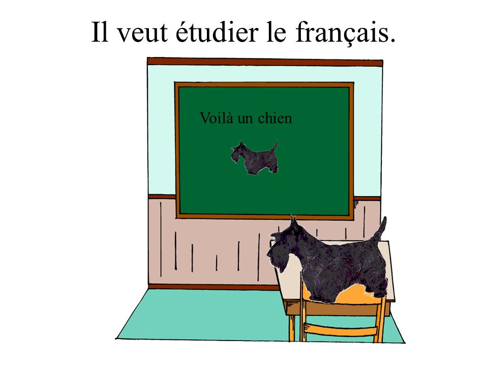 Il veut étudier le français.
